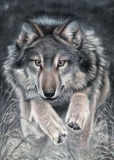 左进伟狼绘画作品
